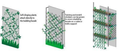 Figure-16-climbing_plants